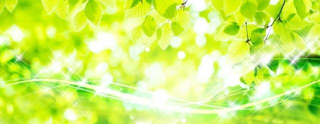 植物(森林)